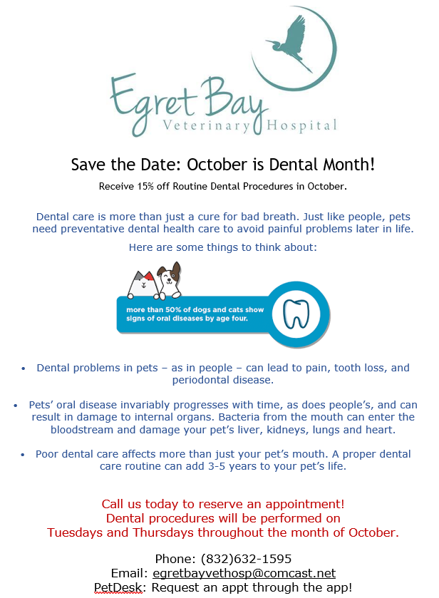 Monthly Specials | Egret Bay Veterinary Hospital